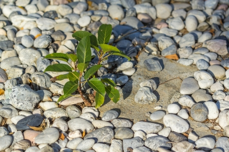 Tree shoot growing from pile of pebbles Stock Photo