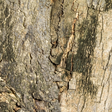 Wooden texture - a bark of an old tree