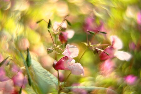 Green bokeh of nature. Blur abstract background. Out of focus.