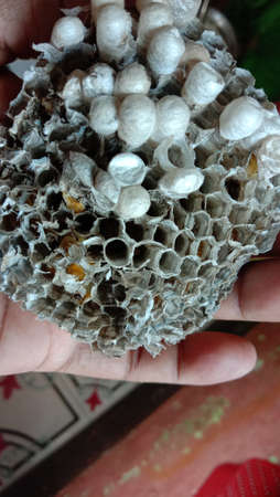 house of bolta insect that is most beautiful creation of nature 版權商用圖片