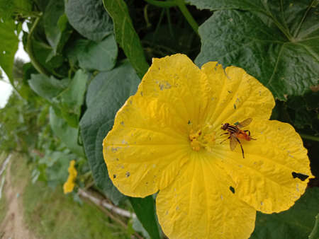 beautiful yellow colored flower with leaf on garden