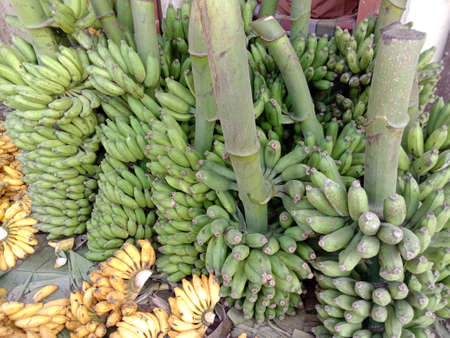 healthy raw banana bunch stock on shop for sell