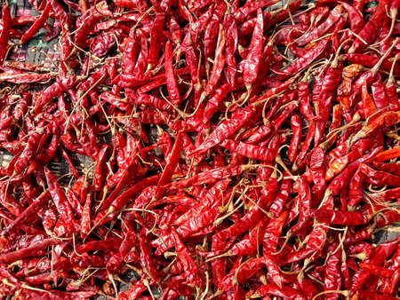 red hot and spicy chili stock on shop for sell Reklamní fotografie