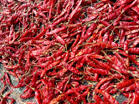 red hot and spicy chili stock on shop for sell