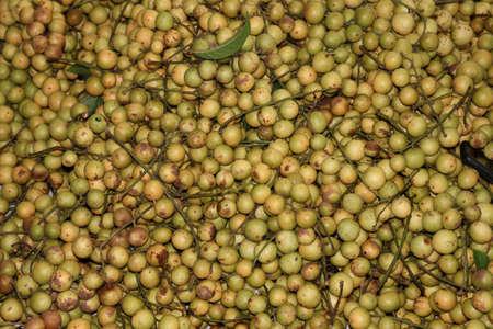 tasty baccaurea motleyana stock on farm for sell and eat
