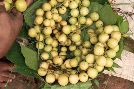 tasty baccaurea motleyana stock on basket in the farm for harvest