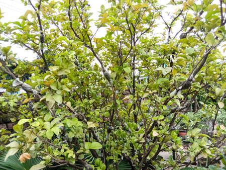 green colored beautiful leaf on tree in garden
