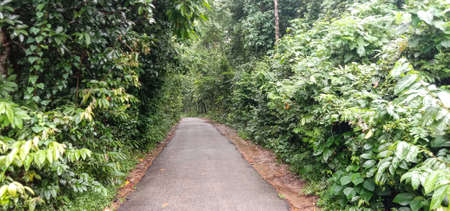 a road view on forest for travel