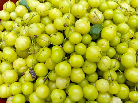 tasty and healthy star gooseberry stock on shop for sell