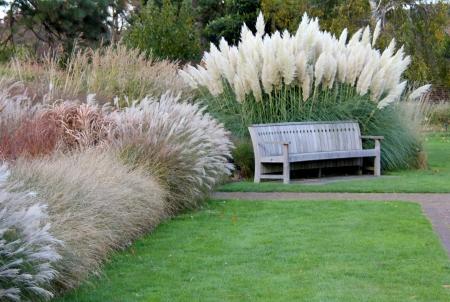 bench park: Parque enclavado banco en varias hierbas y las pampas