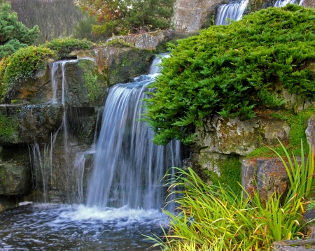 Beautiful Garden Pond and Waterfall with shrubs and water plants
