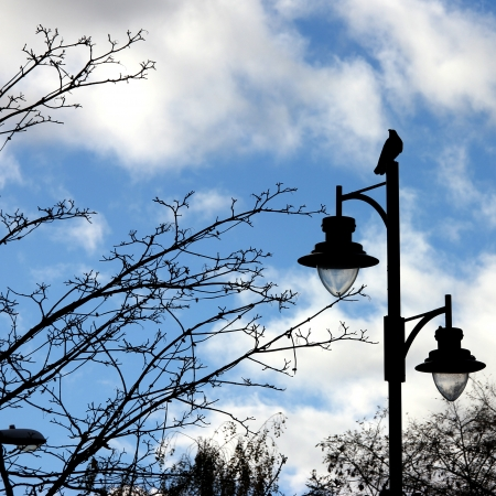 Black Crow perched on a double lamp post Stock Photo - 16892558
