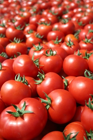 red tomatoes at the market Stock Photo - 9810463