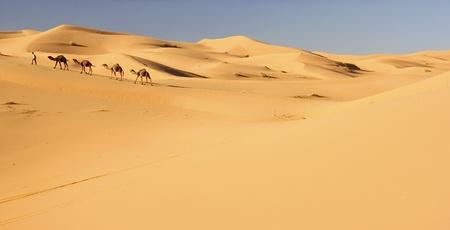 desierto del sahara: Caravana de camellos en el desierto del Sahara