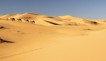 Camel caravan in the Sahara desert photo