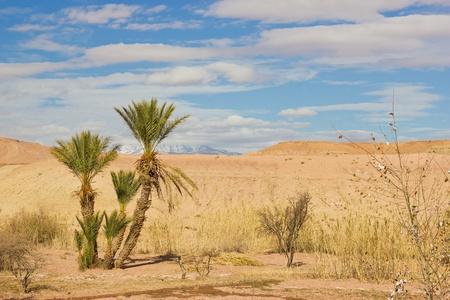 palmboom in de Sahara woestijn