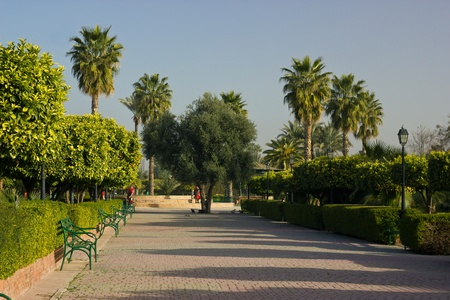 palm tree in Marrakech photo