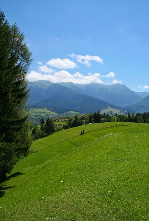 carpathian mountains: Nature in Carpathian mountains