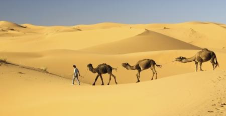 サハラ砂漠でラクダ s キャラバン