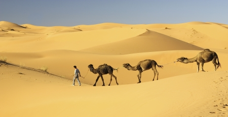 Camel s caravan in the Sahara desert Stock Photo