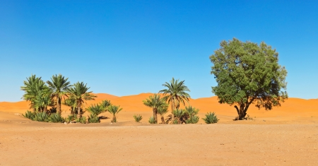 Oasis in the Sahara desert in Morocco Stock Photo
