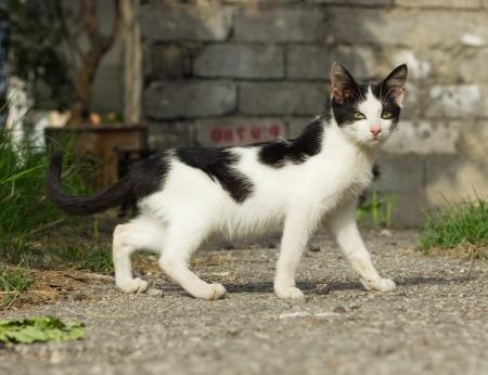 foreleg: Black and white yard kitten outdoor Stock Photo