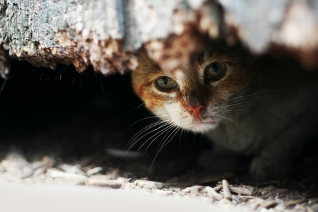 foreleg: Yard cat in abandoned house Stock Photo