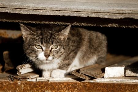 foreleg: Yard cat in abandoned house Stock Photo