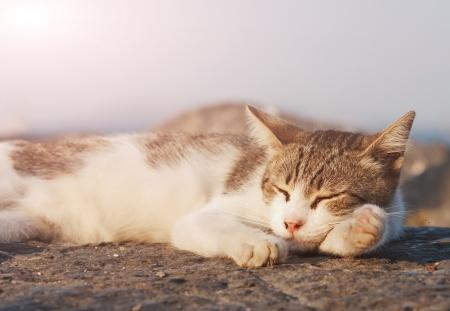 foreleg: Cute yard cat sleeping on pedestrian zone in Istanbul