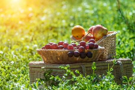 Picnic basket with fruits in green park photo