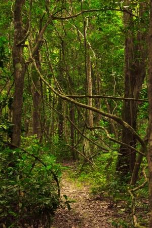 Beautiful trail in the jungle of Tarutao island photo