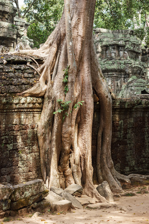 Amazing view of Ta Phrom temple ruins in Angkor, Siem Reap, Cambodia photo