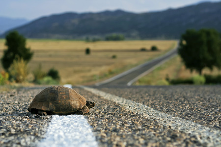 Turtle crossing the rural road Stock Photo