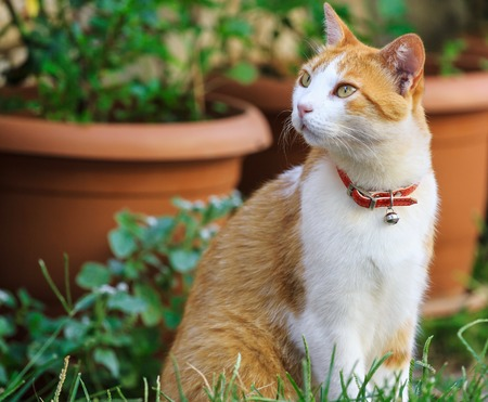 lineage: Cute ginger house cat in a garden