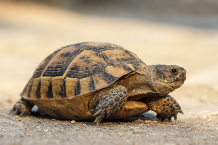 Turtle on the road Stockfoto