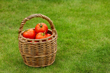 domates: Ripe tomatoes in basket