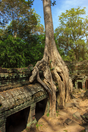 siem reap: Amazing view of Ta Phrom temple ruins in Angkor, Siem Reap Stock Photo