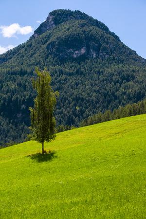 serene landscape: Birch tree on serene countryside landscape