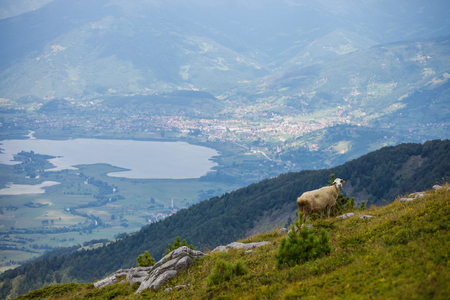 Lonely sheep in a mountains of Montenegro