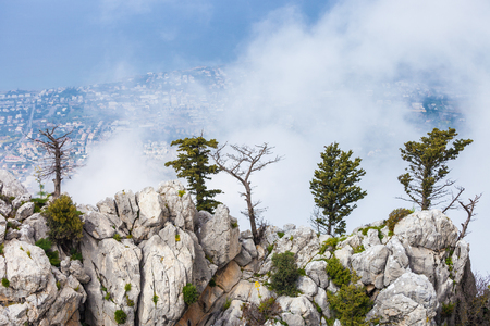 Amazing Trees on a rocky mountains, North Cyprus Stockfoto
