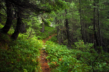 Amazing forest and trail in a mountains