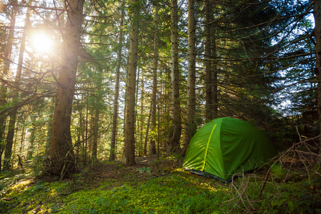 Tourist Tent in a deep forest with morning sun