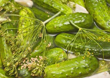 mustard seed: Fresh homemade pickles in brine, with dill, garlic, horseradish, mustard seed and other spices. The cucumbers are not fully pickled yet (half-sour) and still bright green.