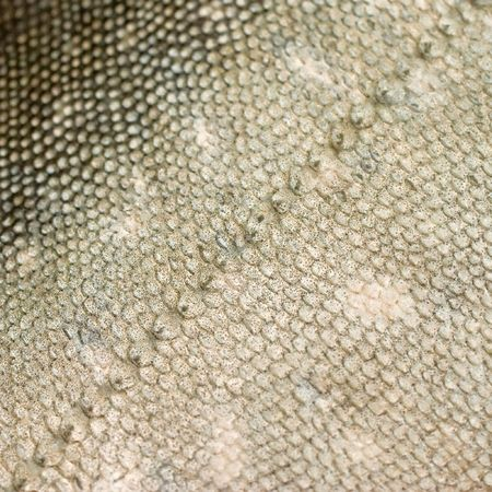 Texture of salmon or trout like fish scales with a diagonal pattern
