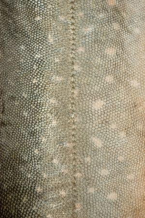 Texture of salmon like fish scales.  Stock fotó