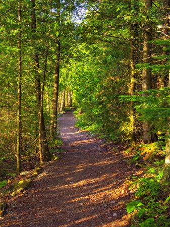 forest trail: Wide winding trail in a mixed forest lit by the setting sun shining through the trees Stock Photo