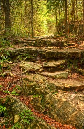 Rocky steps on a forest trail