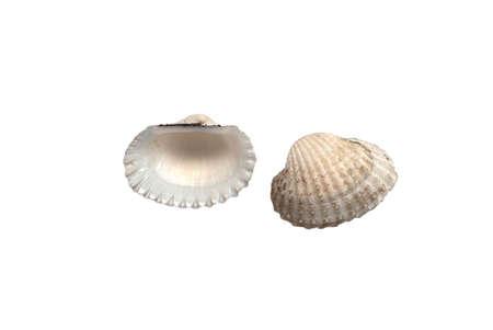 Shell on white background Stock Photo - 18439573