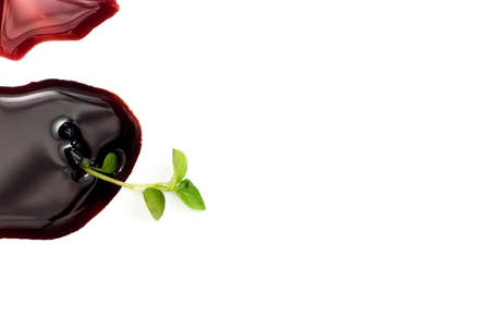 A small tree and blood isolated on white background Stock Photo - 18871745