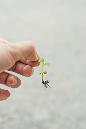 A woman s hand is catching a leaf of baby tree on grey background Stock Photo - 18871744